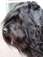 В Центральном районе найдены две потерявшиеся породистые собаки