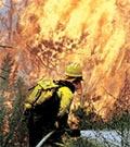 В Тольятти горело два гектара низового леса