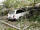В Москве после падения деревьев в больницах оказались 6 человек