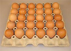 Тольятти ожидает повышение цен на яйца