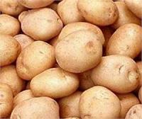 Жителям Тольятти предлагают земельные участки для посадки картофеля